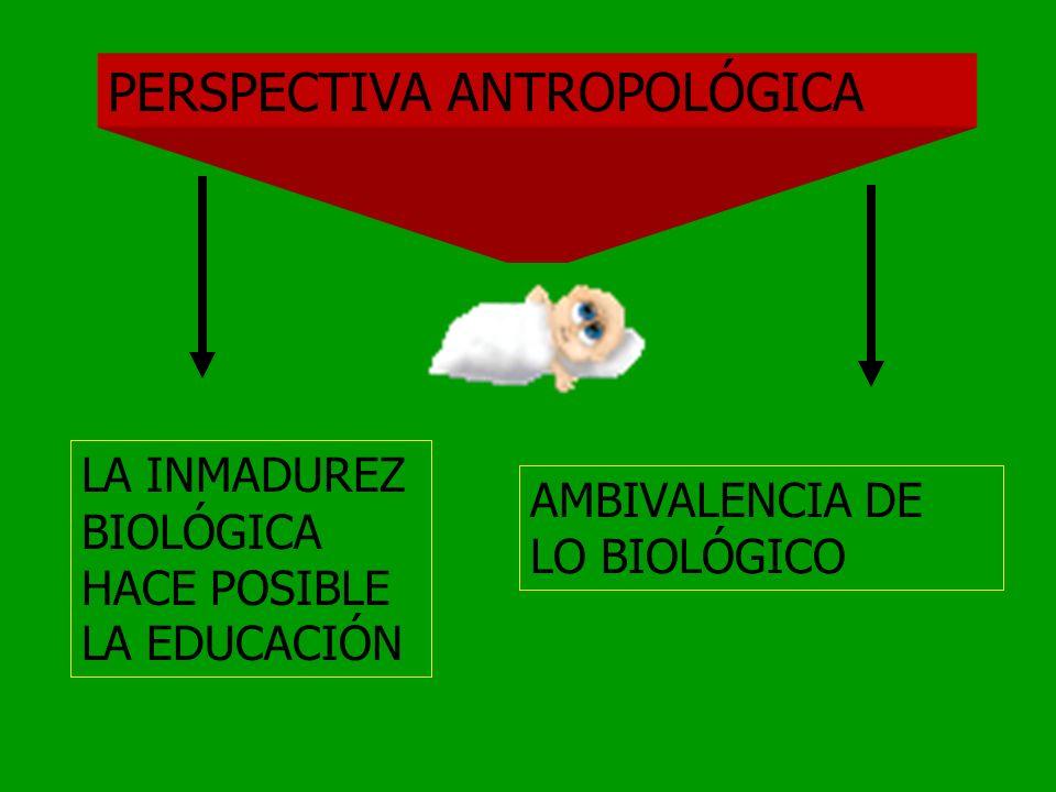 PERSPECTIVA ANTROPOLÓGICA