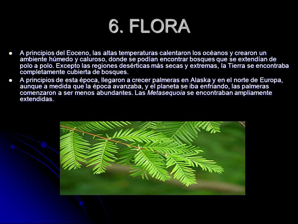 6. FLORA