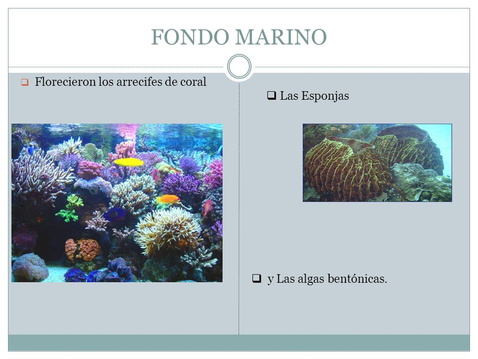 FONDO MARINO Florecieron los arrecifes de coral Las Esponjas .