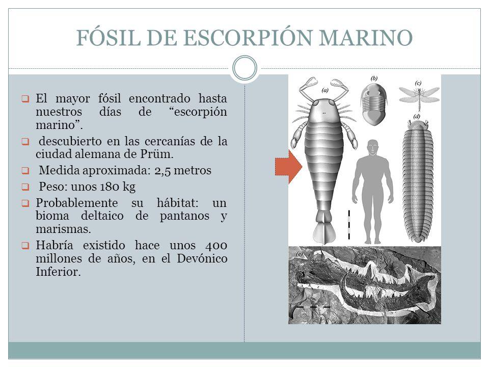 FÓSIL DE ESCORPIÓN MARINO