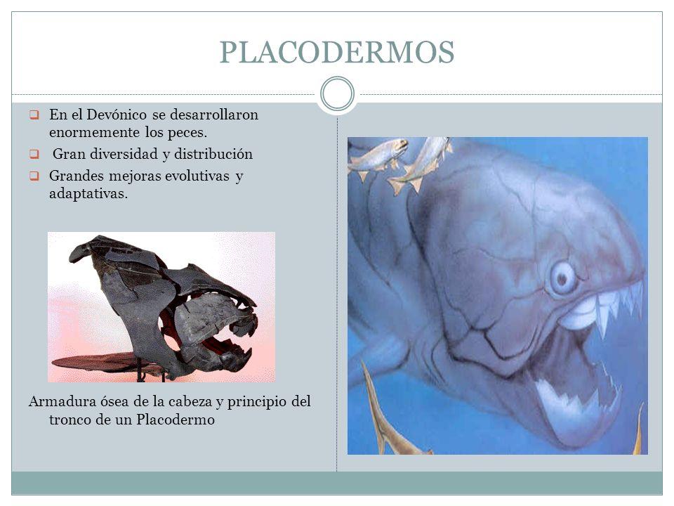 PLACODERMOS En el Devónico se desarrollaron enormemente los peces.