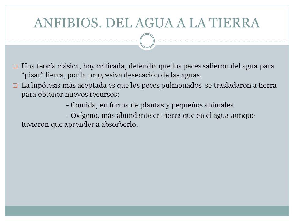 ANFIBIOS. DEL AGUA A LA TIERRA