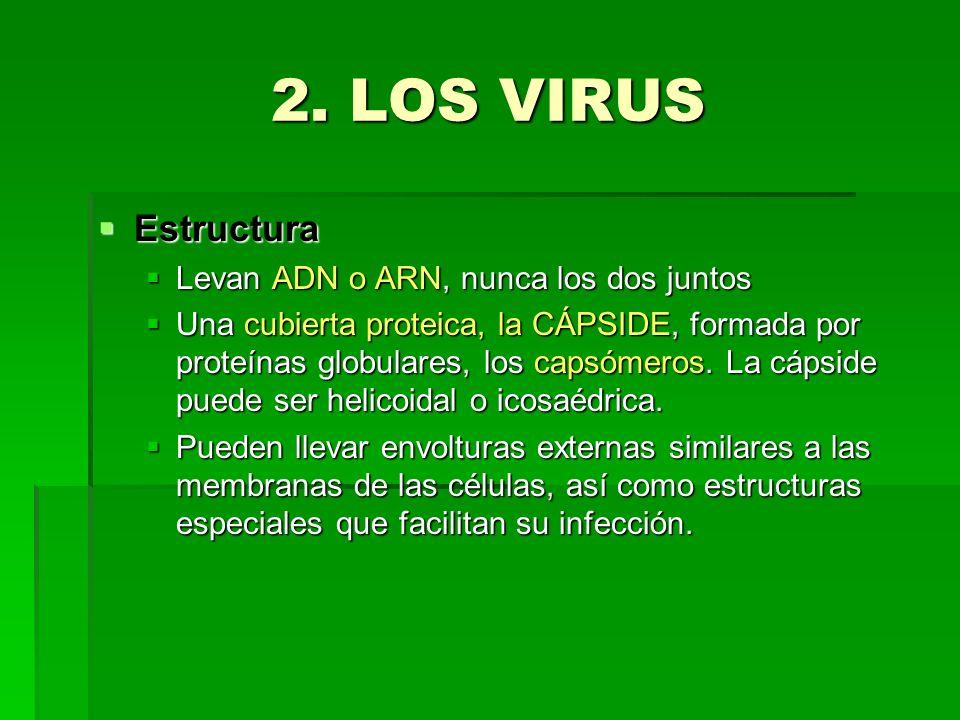 2. LOS VIRUS Estructura Levan ADN o ARN, nunca los dos juntos