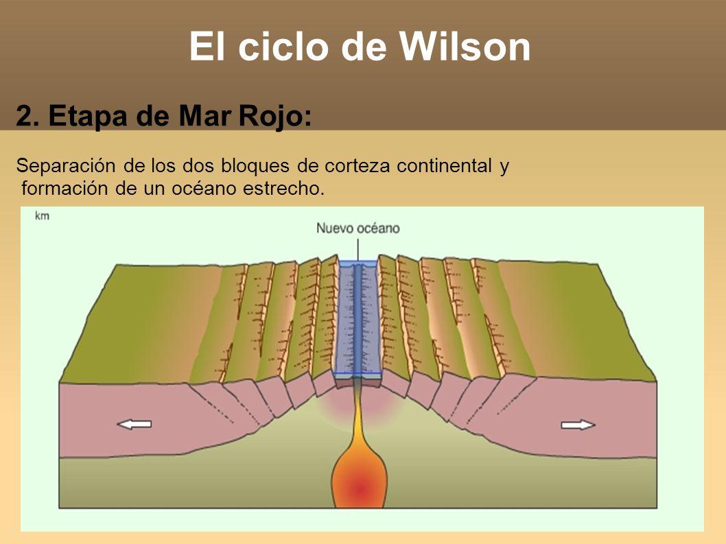 El ciclo de Wilson 2. Etapa de Mar Rojo: