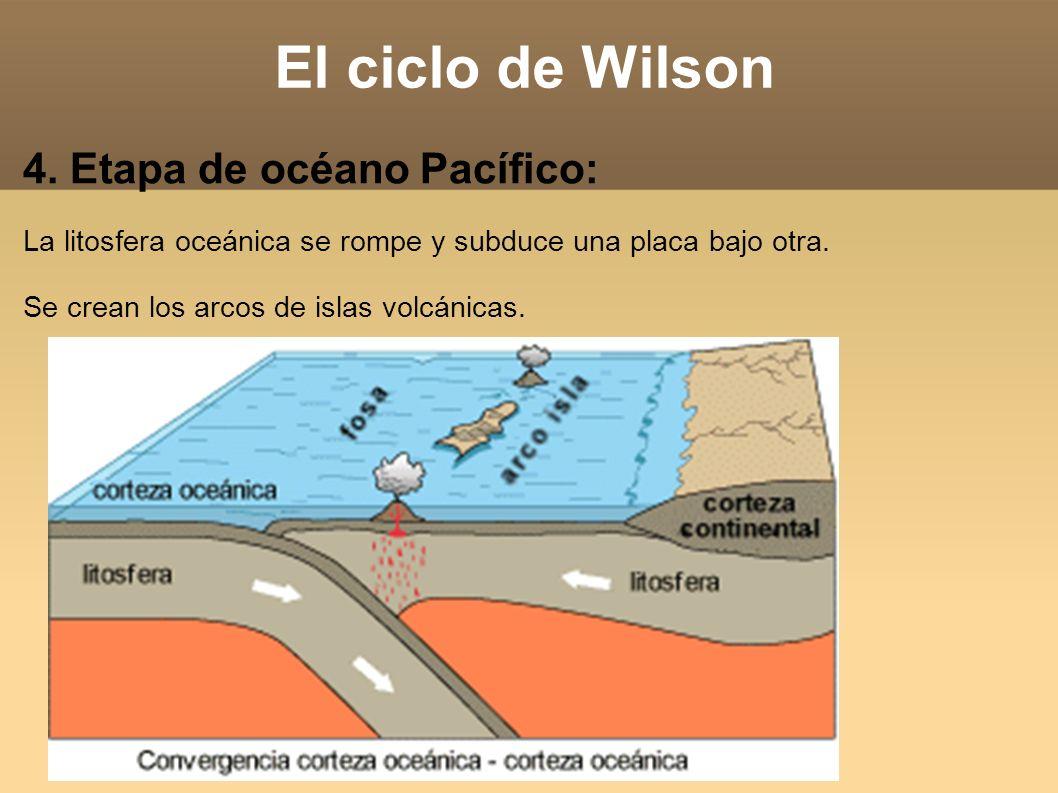 El ciclo de Wilson 4. Etapa de océano Pacífico: