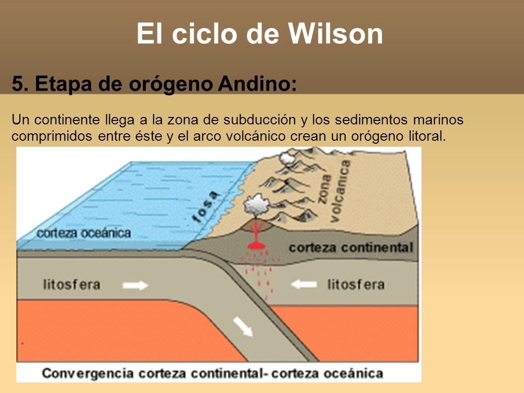 El ciclo de Wilson 5. Etapa de orógeno Andino: