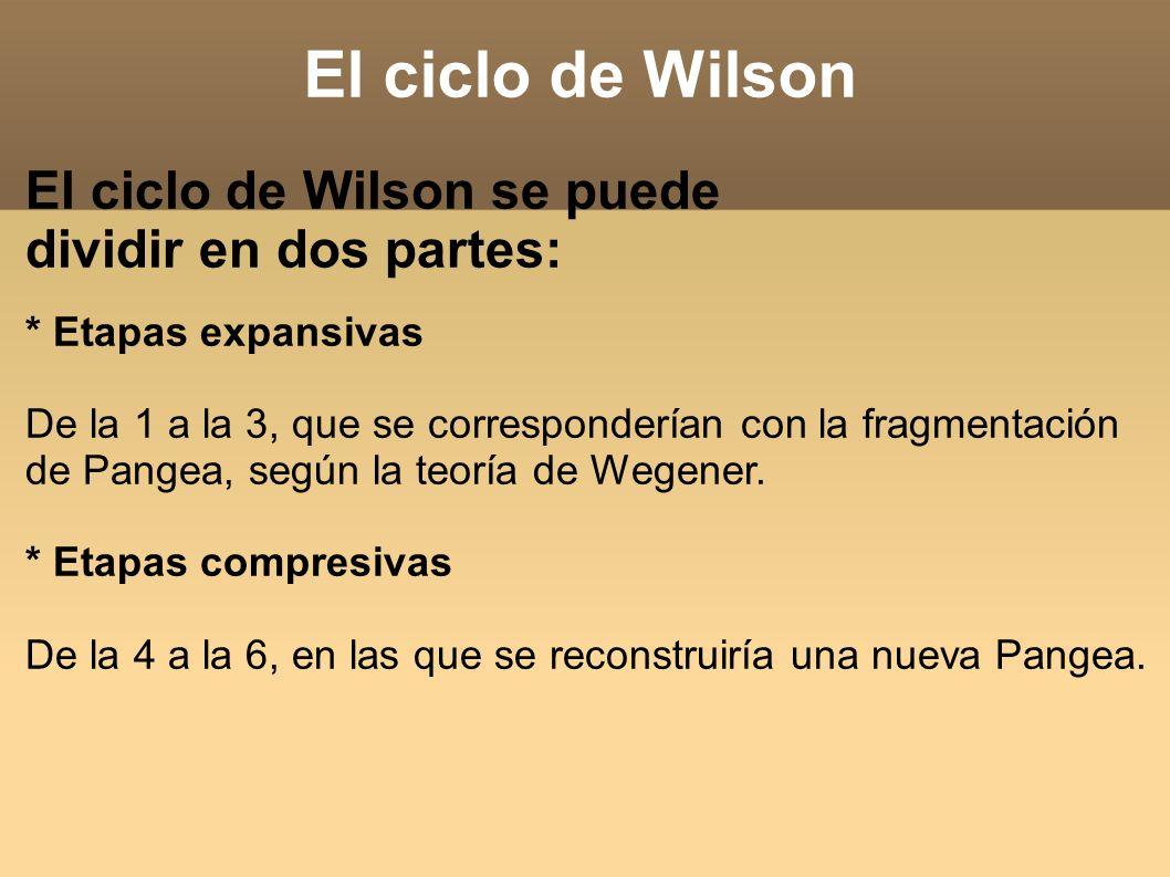 El ciclo de Wilson El ciclo de Wilson se puede dividir en dos partes: