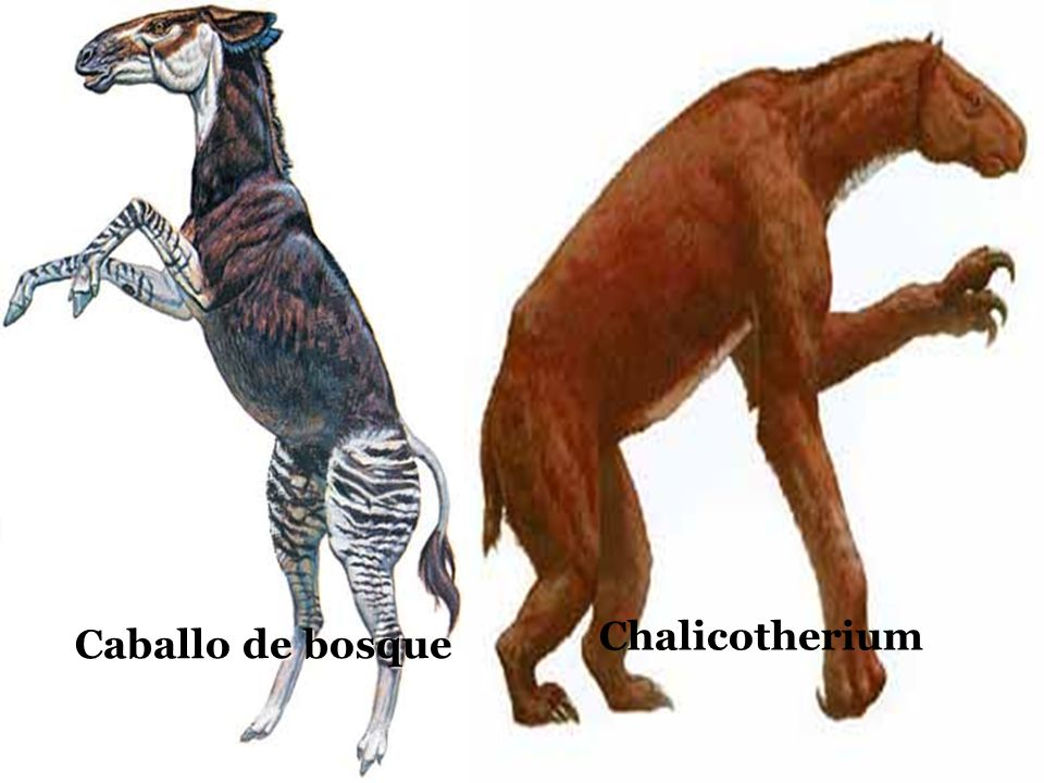 Chalicotherium Caballo de bosque