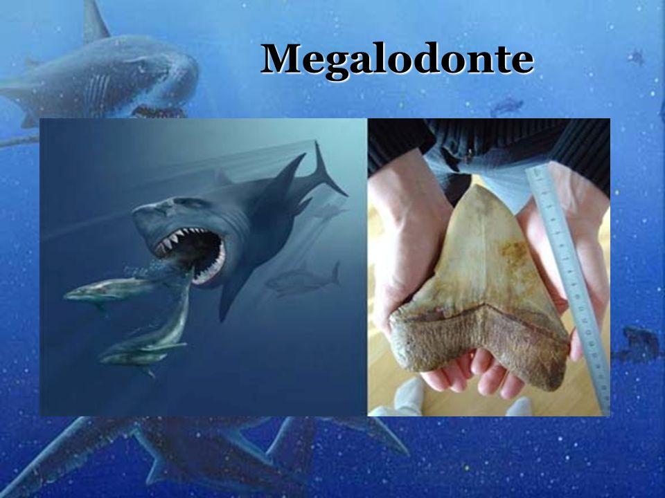 Megalodonte