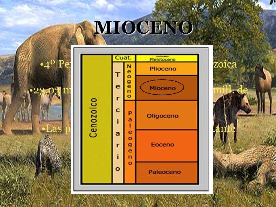 MIOCENO 4º Período geológico de la Era Cenozoica