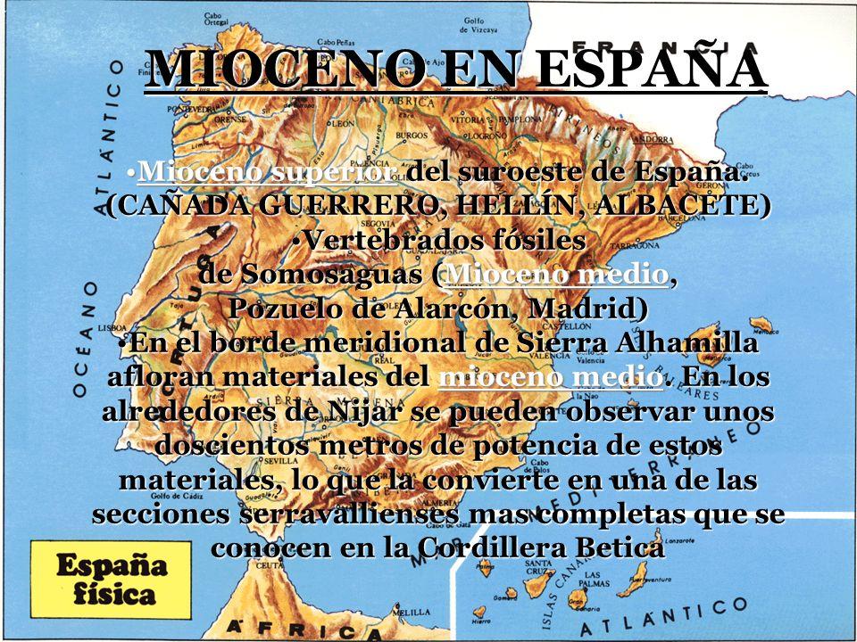 de Somosaguas (Mioceno medio, Pozuelo de Alarcón, Madrid)