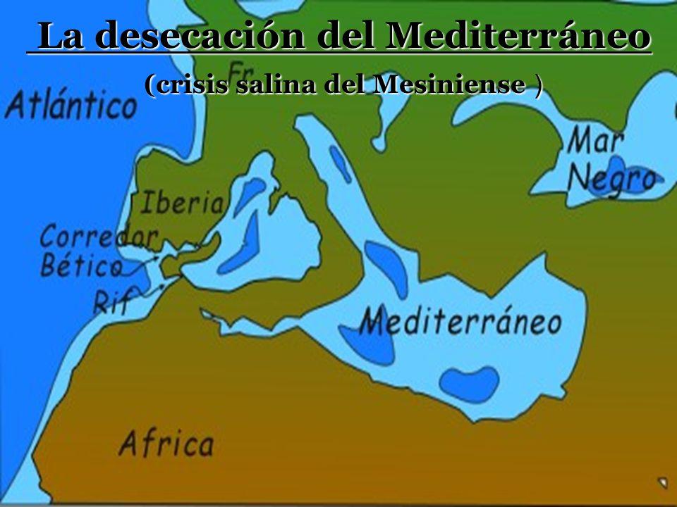 La desecación del Mediterráneo (crisis salina del Mesiniense )