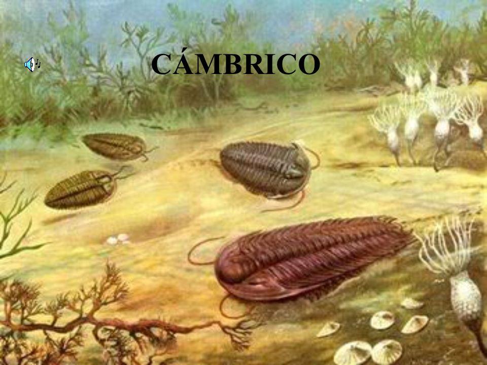 CÁMBRICO