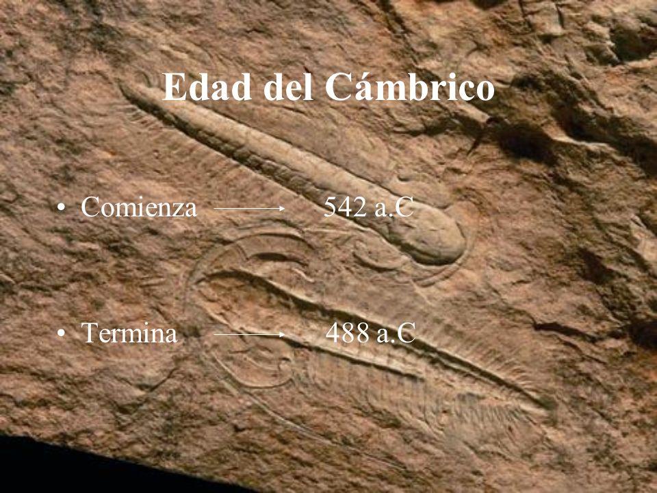 Edad del Cámbrico Comienza 542 a.C Termina 488 a.C