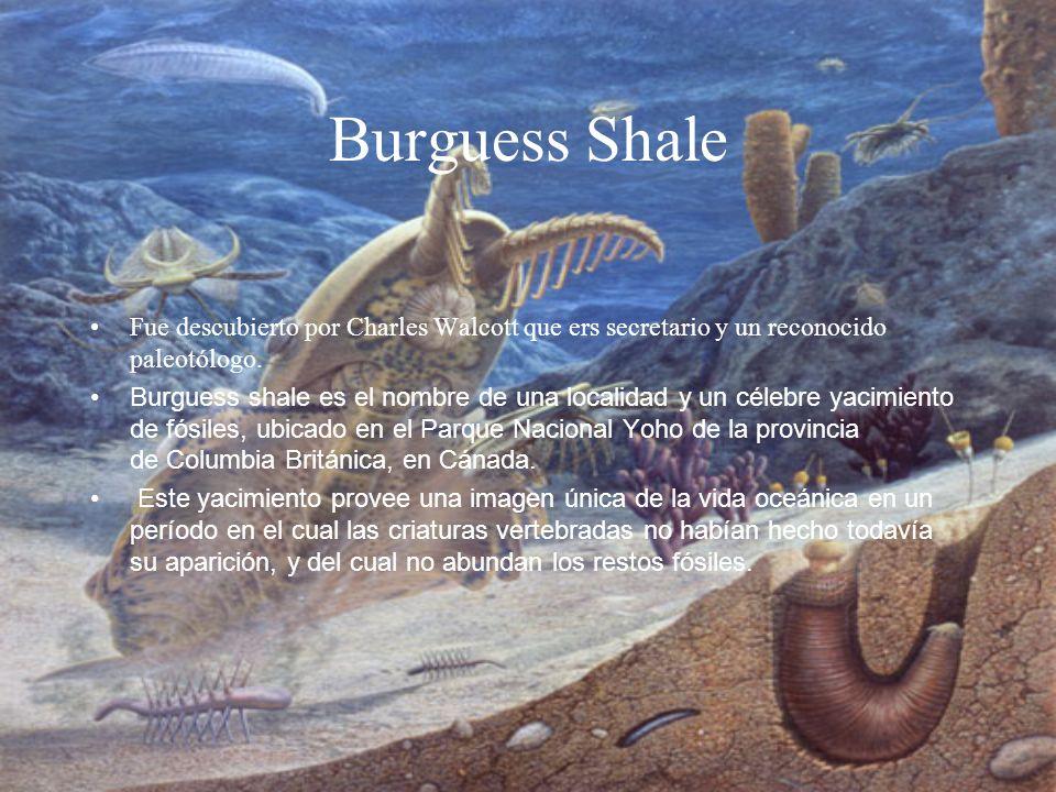 Burguess ShaleFue descubierto por Charles Walcott que ers secretario y un reconocido paleotólogo.