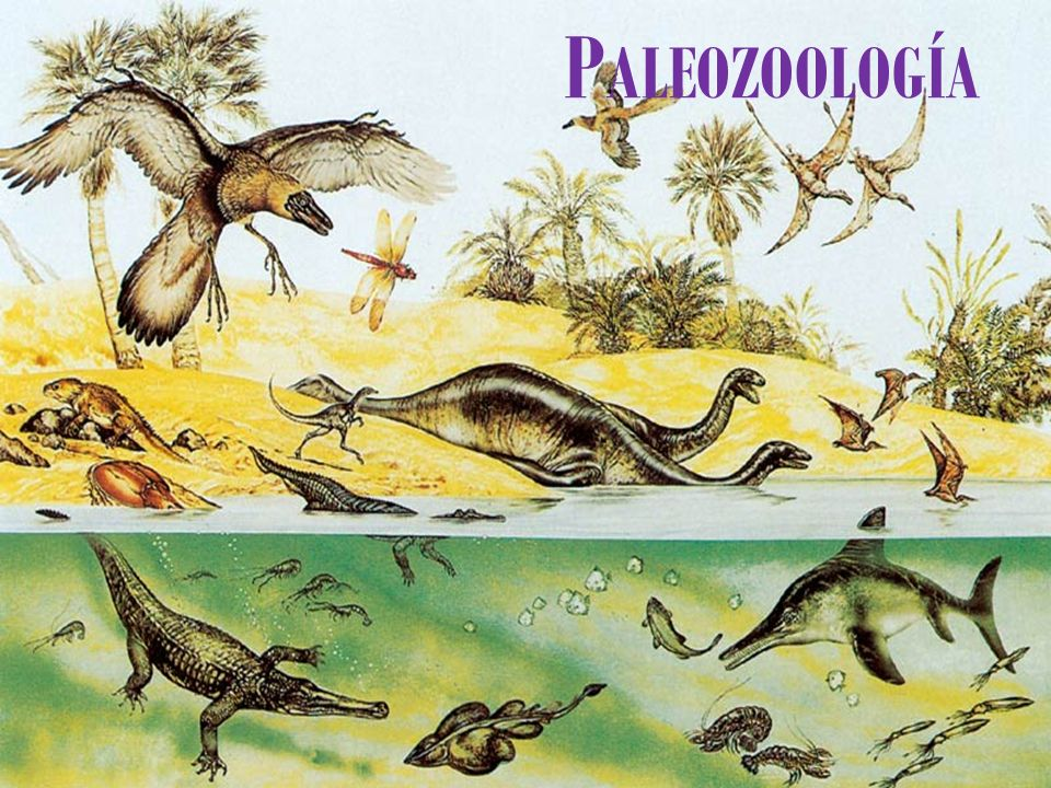 PALEOZOOLOGÍA