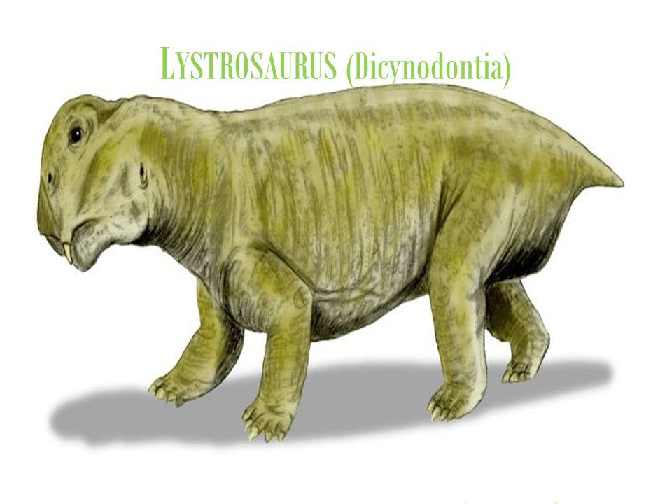 LYSTROSAURUS (Dicynodontia)