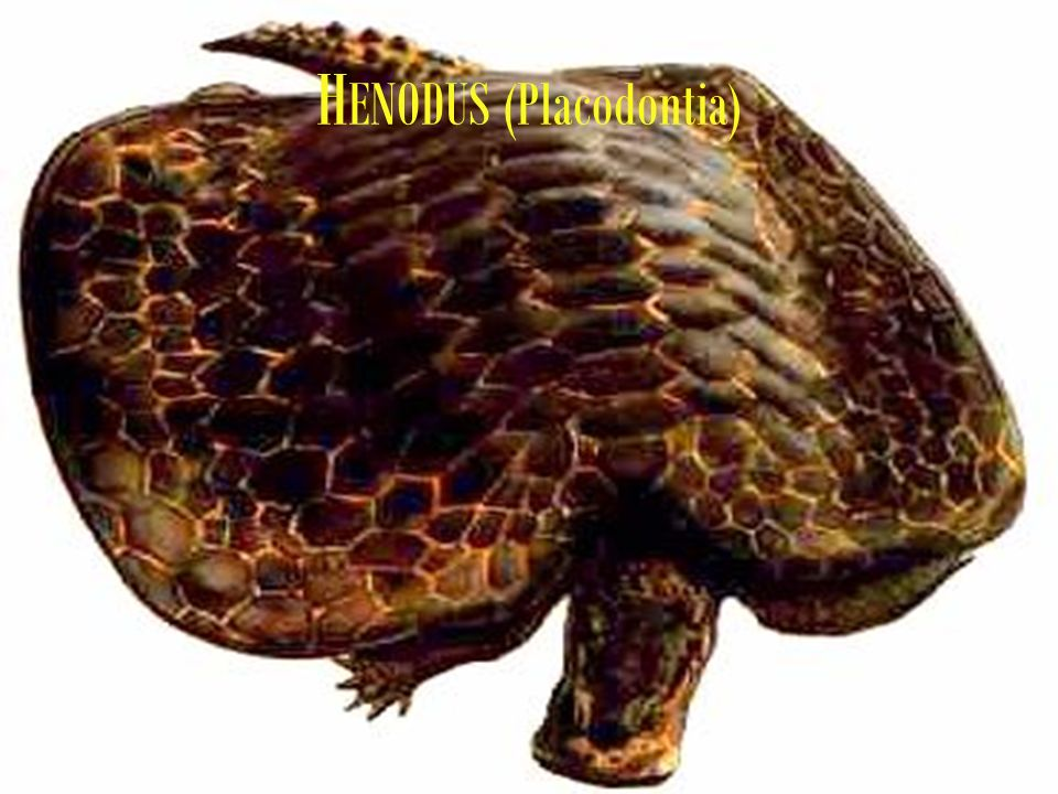 HENODUS (Placodontia)