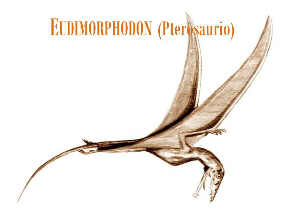 EUDIMORPHODON (Pterosaurio)