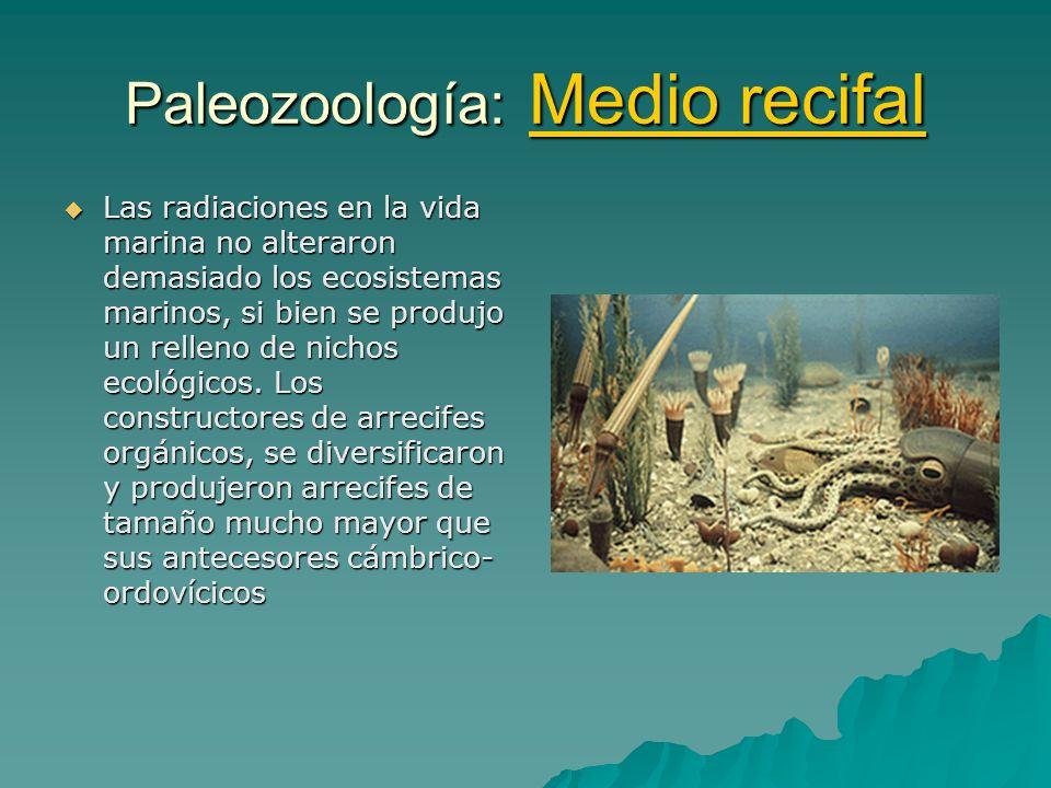 Paleozoología: Medio recifal