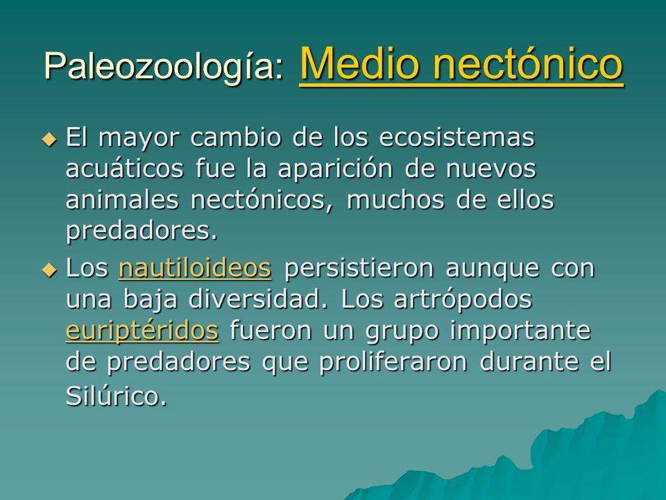 Paleozoología: Medio nectónico