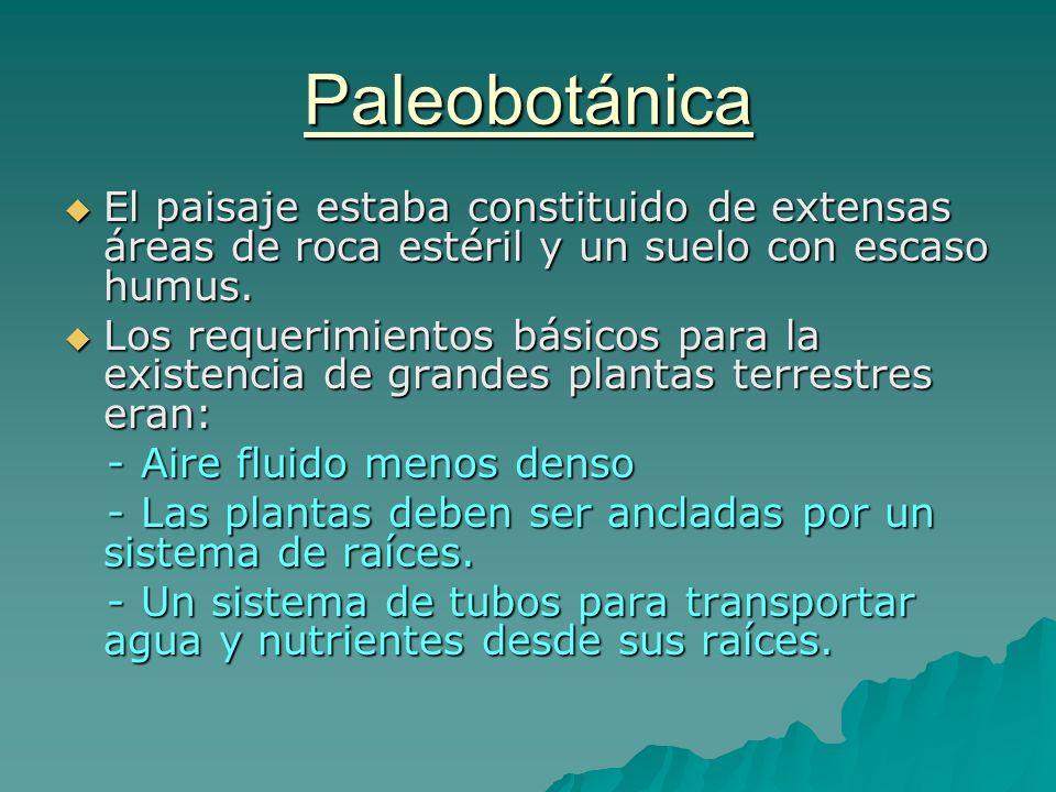 Paleobotánica El paisaje estaba constituido de extensas áreas de roca estéril y un suelo con escaso humus.