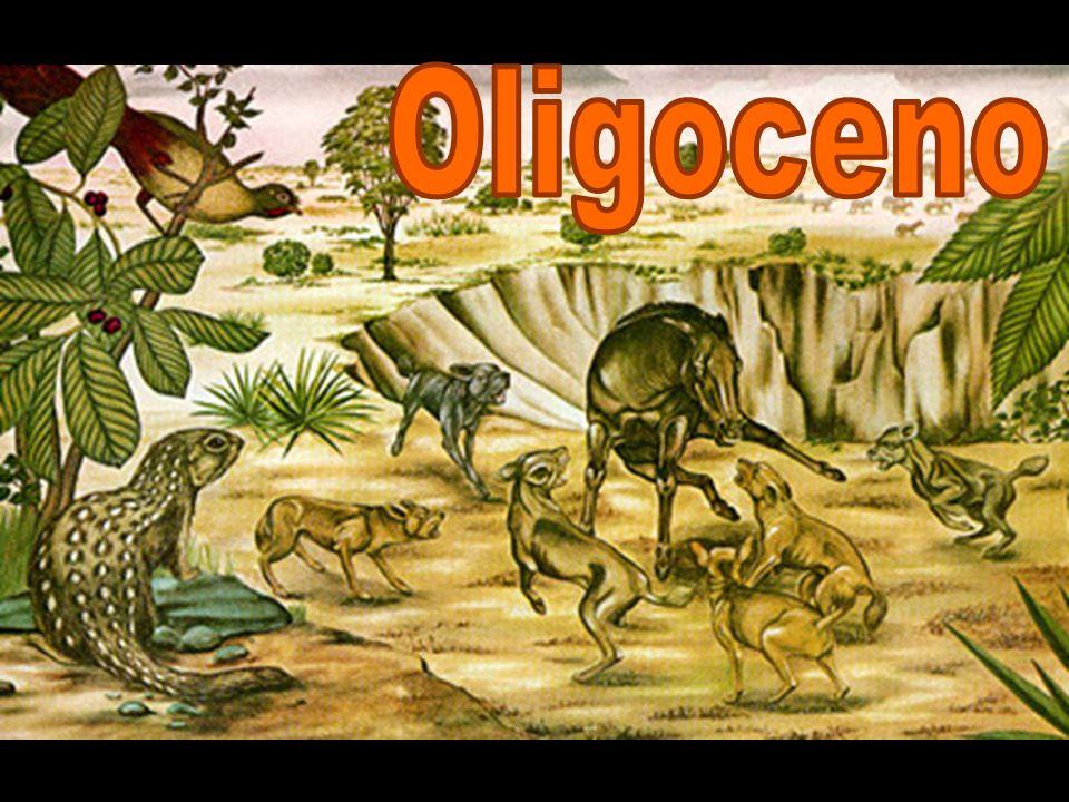 Oligoceno