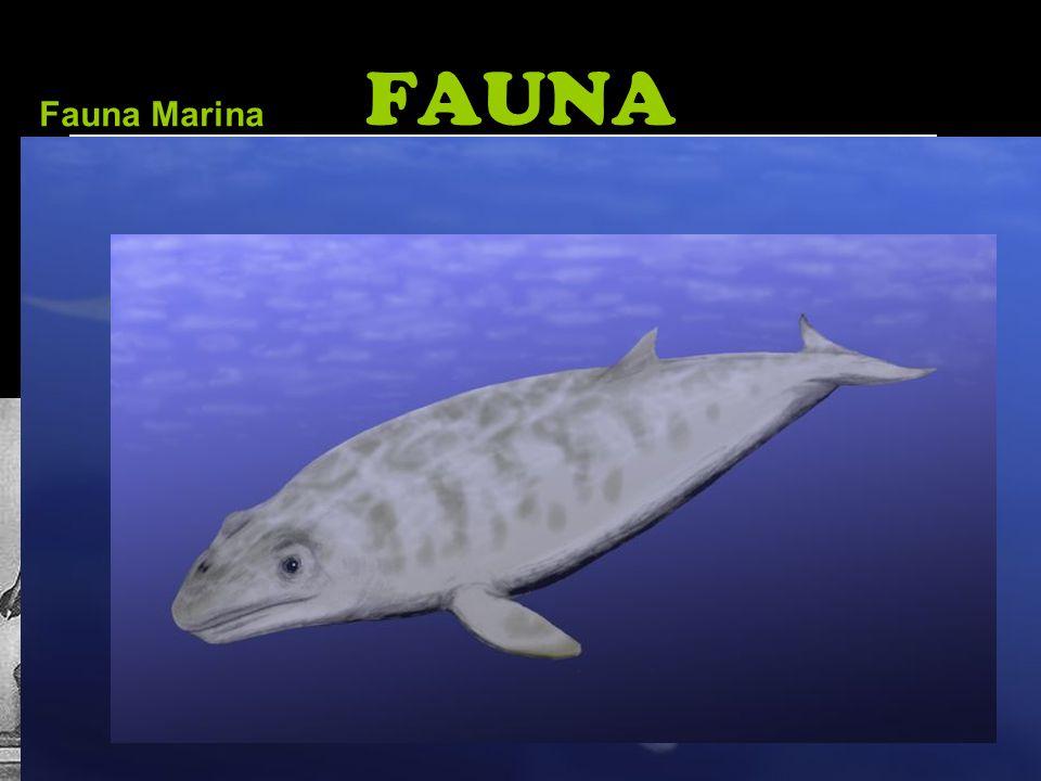 FAUNA Fauna Marina.