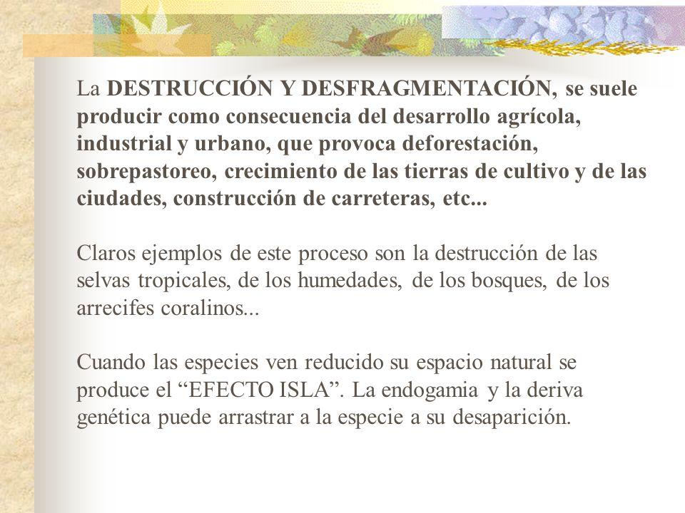 La DESTRUCCIÓN Y DESFRAGMENTACIÓN, se suele producir como consecuencia del desarrollo agrícola, industrial y urbano, que provoca deforestación, sobrepastoreo, crecimiento de las tierras de cultivo y de las ciudades, construcción de carreteras, etc...
