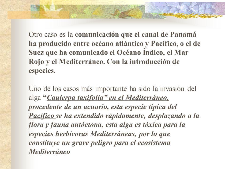 Otro caso es la comunicación que el canal de Panamá ha producido entre océano atlántico y Pacífico, o el de Suez que ha comunicado el Océano Índico, el Mar Rojo y el Mediterráneo. Con la introducción de especies.