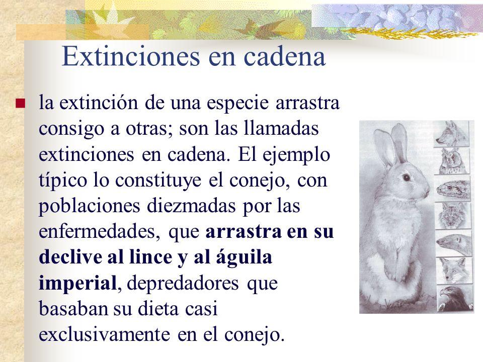 Extinciones en cadena