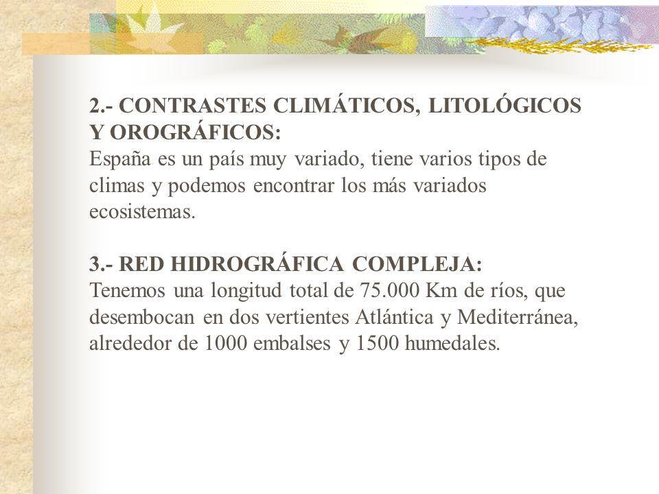 2.- CONTRASTES CLIMÁTICOS, LITOLÓGICOS Y OROGRÁFICOS: