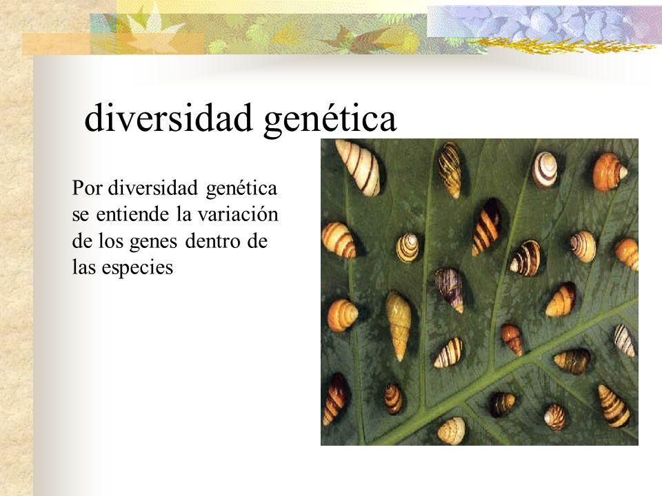 diversidad genética Por diversidad genética se entiende la variación de los genes dentro de las especies.