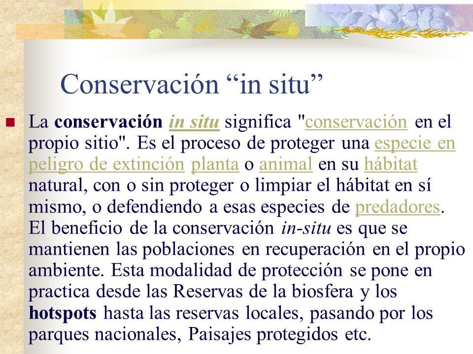 Conservación in situ