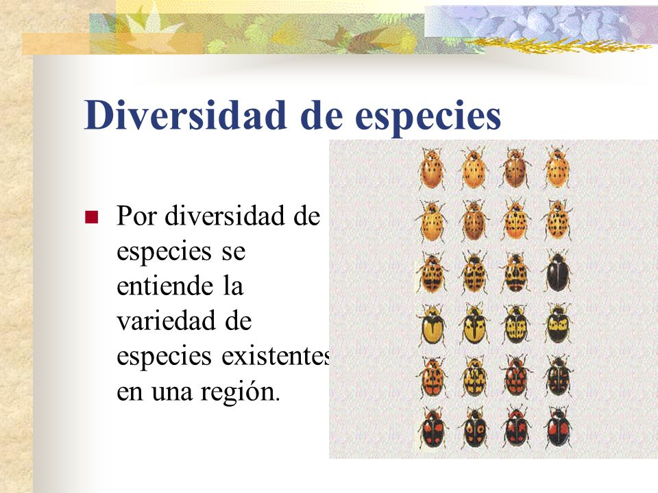 Diversidad de especies