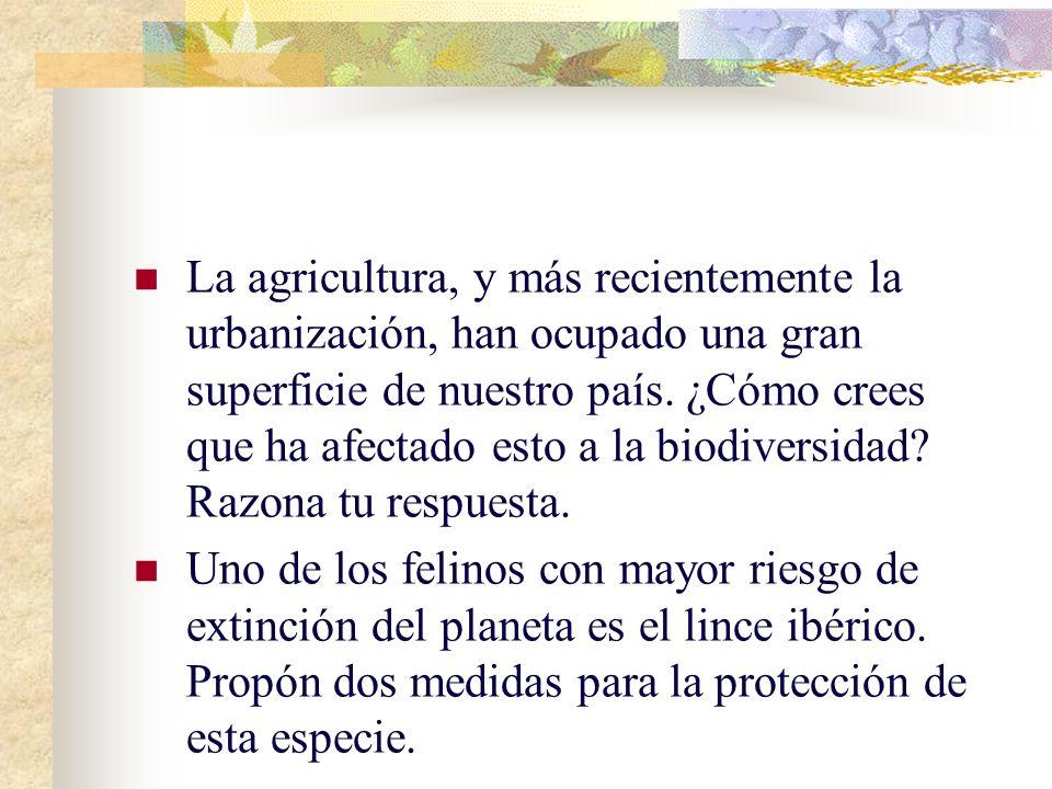 La agricultura, y más recientemente la urbanización, han ocupado una gran superficie de nuestro país. ¿Cómo crees que ha afectado esto a la biodiversidad Razona tu respuesta.