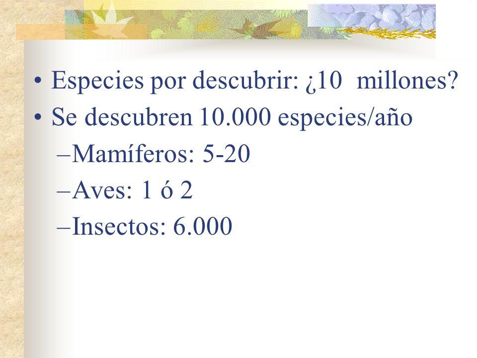 Especies por descubrir: ¿10 millones