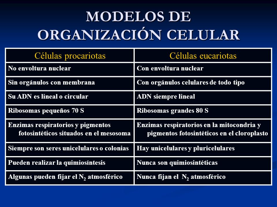 MODELOS DE ORGANIZACIÓN CELULAR