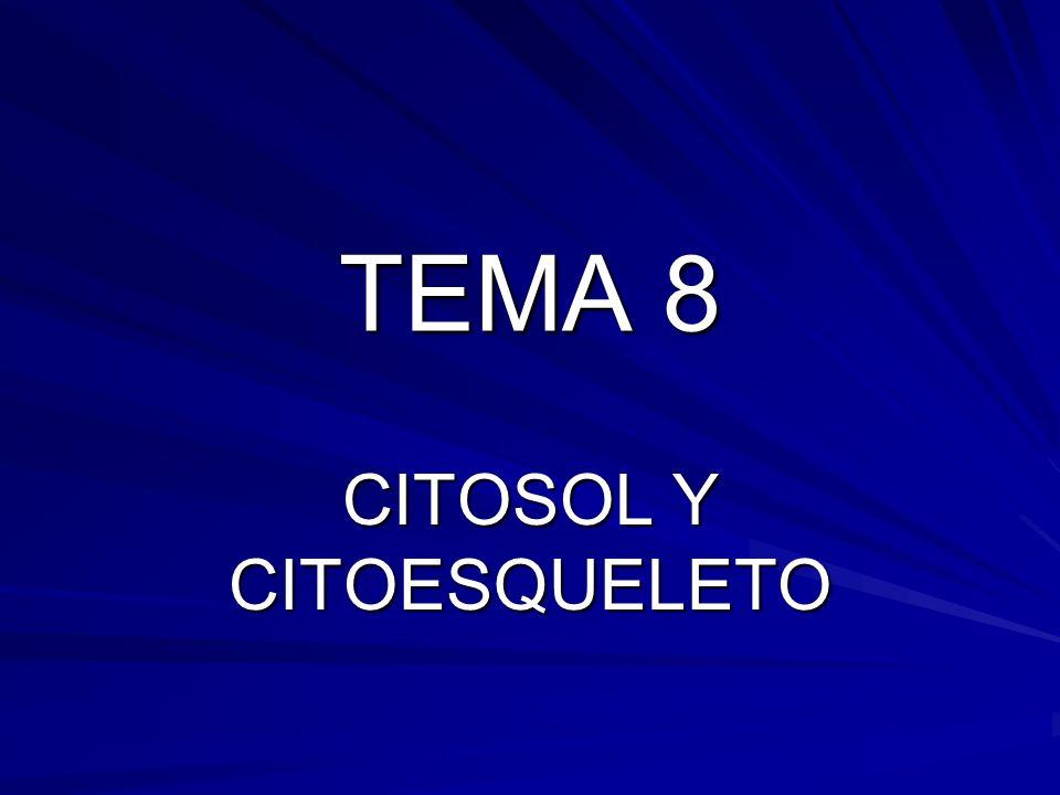 CITOSOL Y CITOESQUELETO
