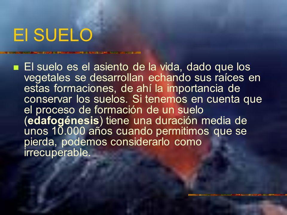 El SUELO