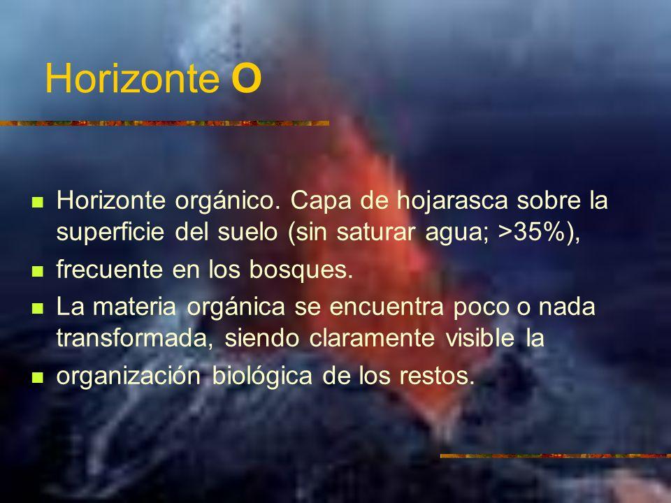 Horizonte O Horizonte orgánico. Capa de hojarasca sobre la superficie del suelo (sin saturar agua; >35%),