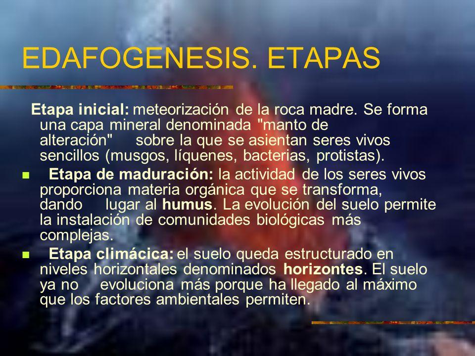 EDAFOGENESIS. ETAPAS