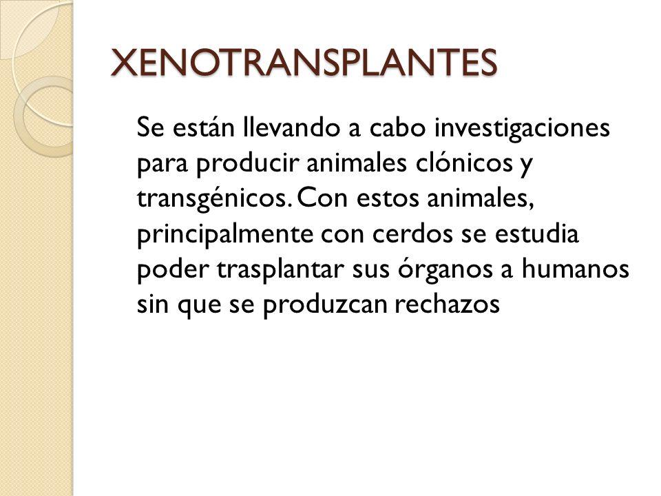 XENOTRANSPLANTES