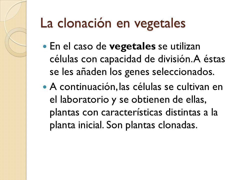 La clonación en vegetales