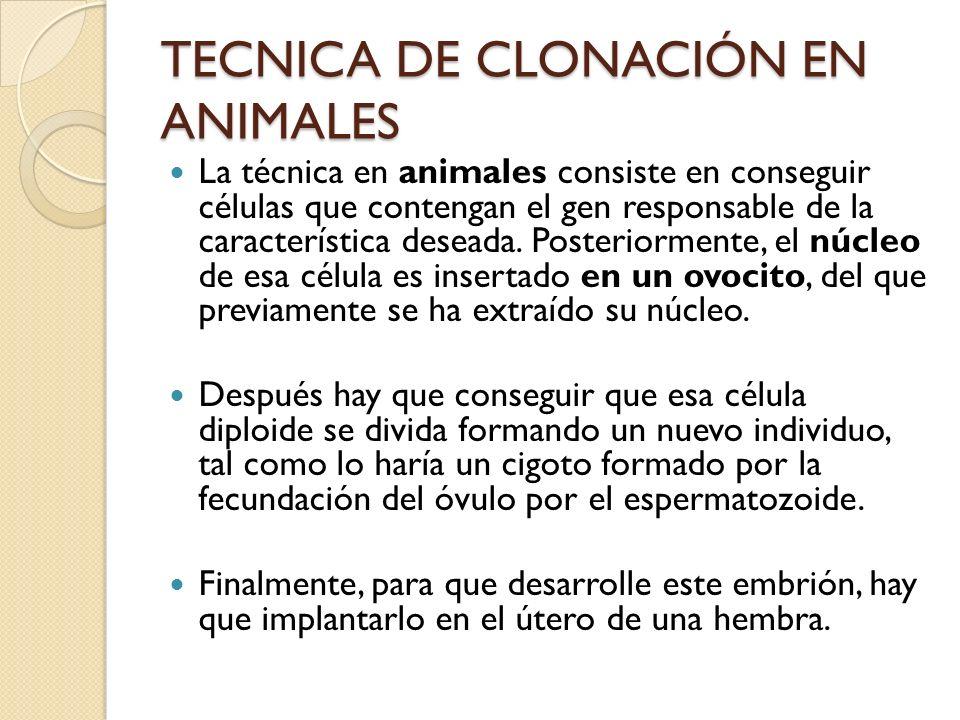 TECNICA DE CLONACIÓN EN ANIMALES