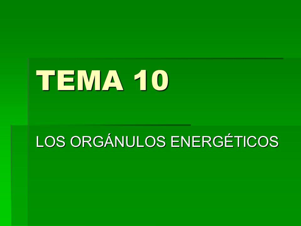 LOS ORGÁNULOS ENERGÉTICOS