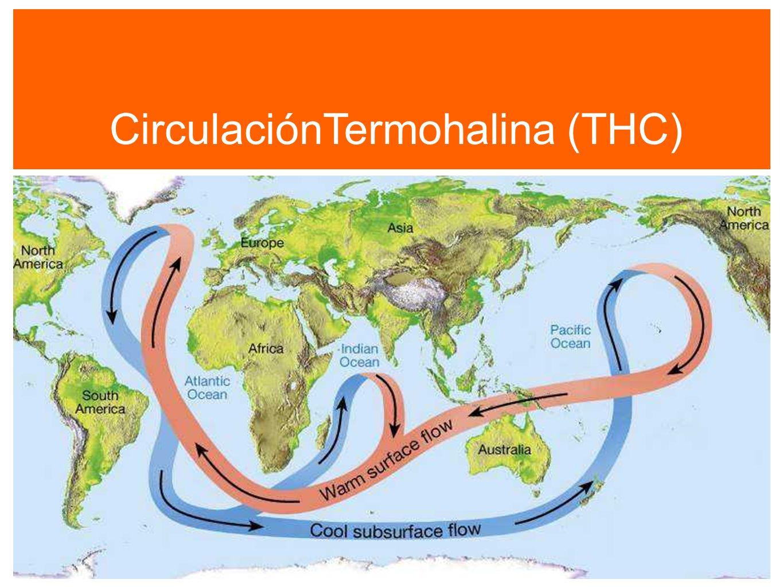 CirculaciónTermohalina (THC)
