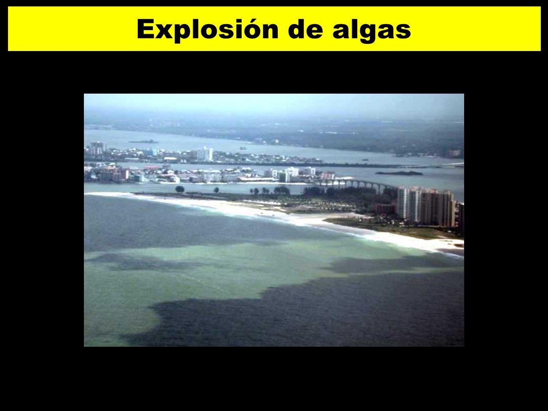 Explosión de algas 5