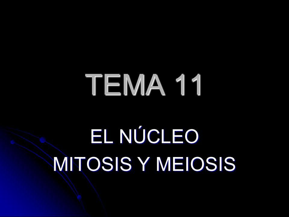 EL NÚCLEO MITOSIS Y MEIOSIS