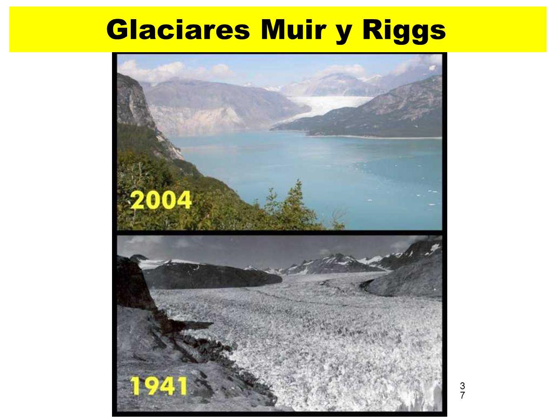 Glaciares Muir y Riggs 37 3737